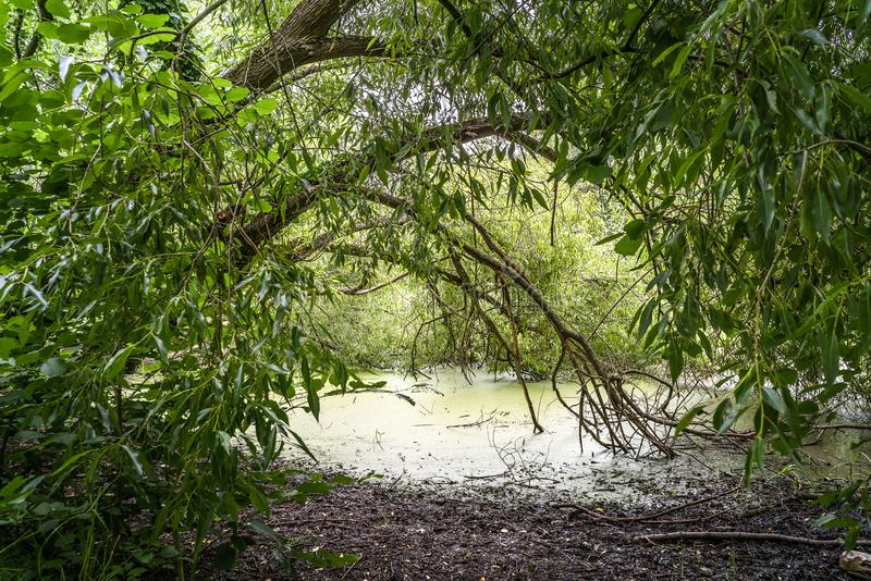 Fallender Baum im Wald stockfoto