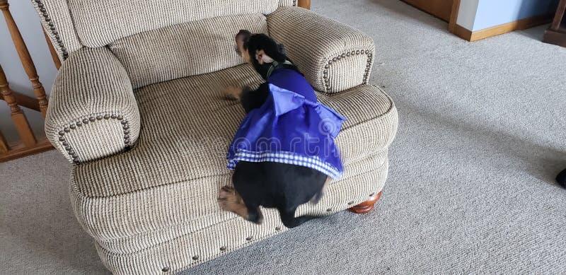 Fallender Hund stockbild