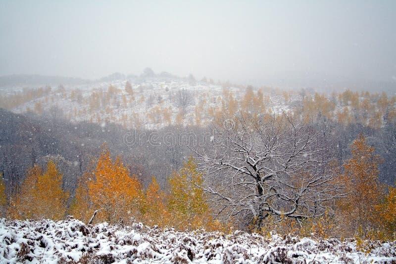 Fallender Schnee stockbild