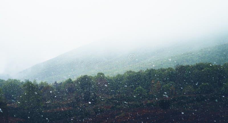 fallender Schnee in den Bergen, Straße im Wald mit Schneeflocken, Winternatur, Feiertagswochenende in der Natur, grüner Baum mit  lizenzfreie stockfotos