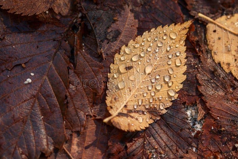 fallet leavesregn arkivbild