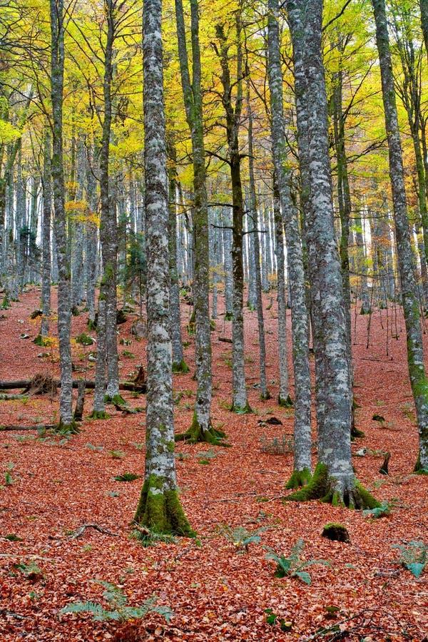 Fallfarben in der Herbstjahreszeit stockfoto