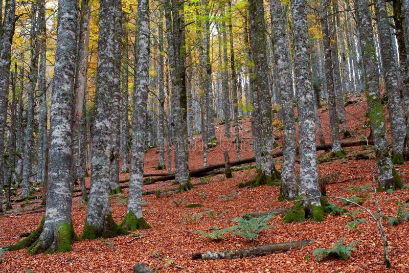 Fallfarben in der Herbstjahreszeit stockbilder