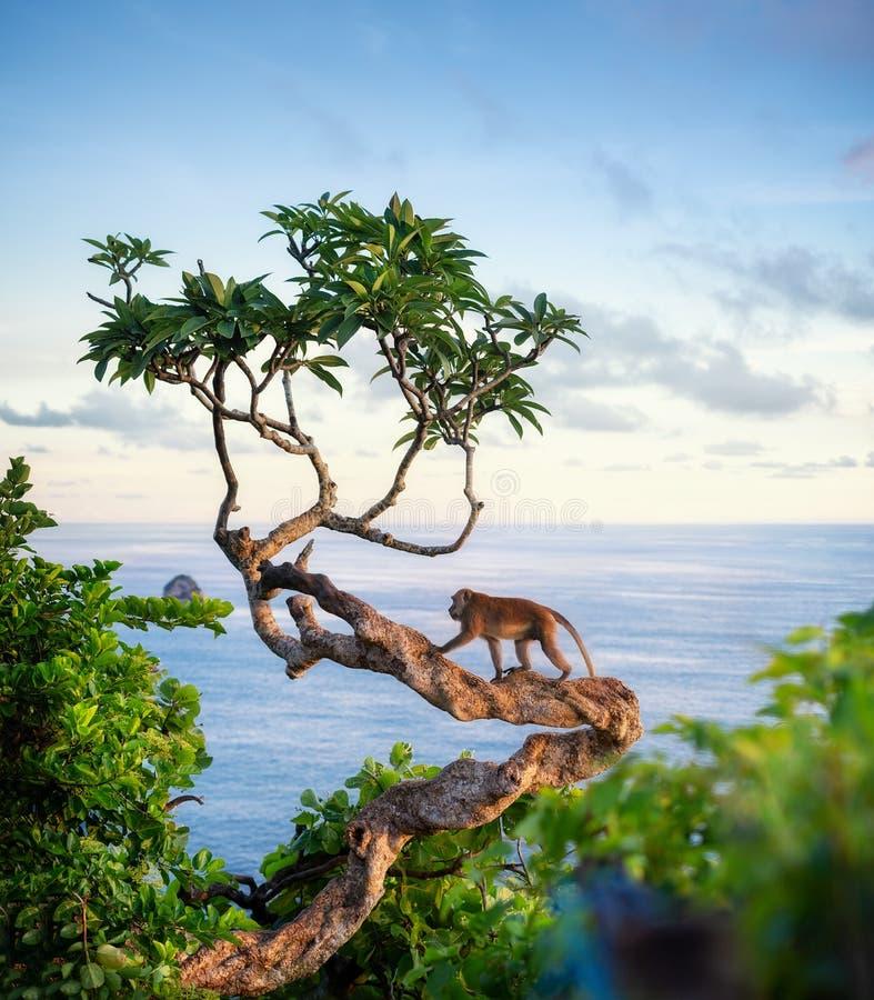 Fallhammer auf dem Baum Tiere im wilden Landschaft w?hrend des Sonnenuntergangs Kelingking-Strand, Nusa Penida, Bali, Indonesien stockfoto