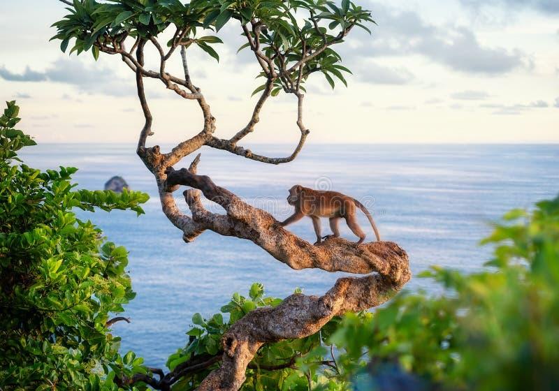 Fallhammer auf dem Baum Tiere im wilden Landschaft w?hrend des Sonnenuntergangs Kelingking-Strand, Nusa Penida, Bali, Indonesien lizenzfreie stockfotos