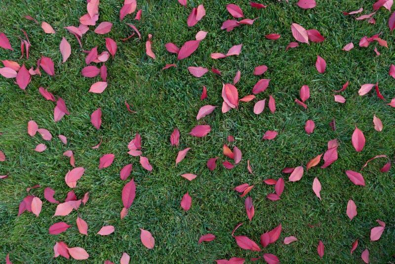 Fallhintergrund: Rotblätter auf grünem Gras lizenzfreie stockbilder
