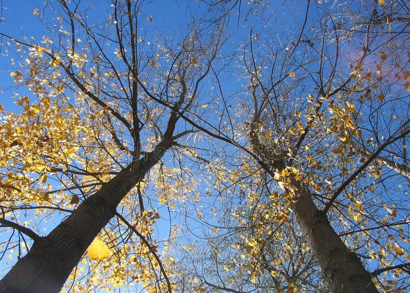Download Fallindia kullu arkivfoto. Bild av tree, india, högväxt - 500448