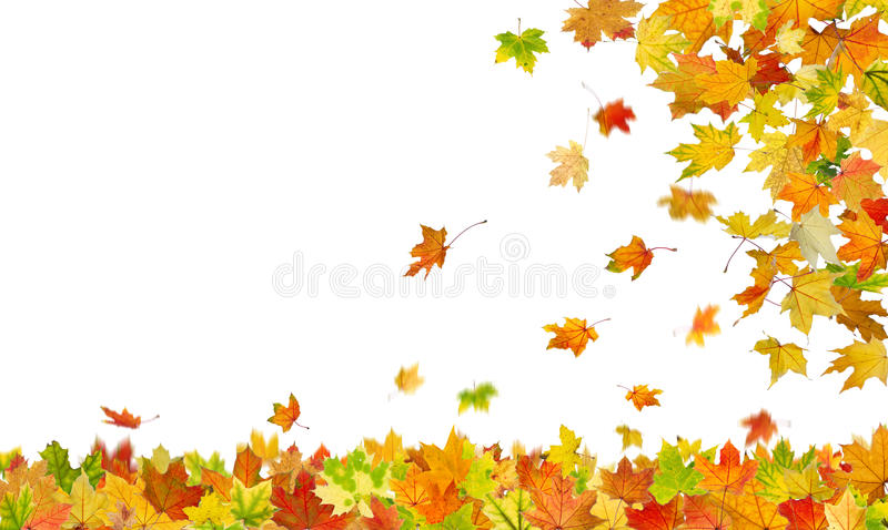 Download Falling autumn leaves stock image. Image of november - 33267867