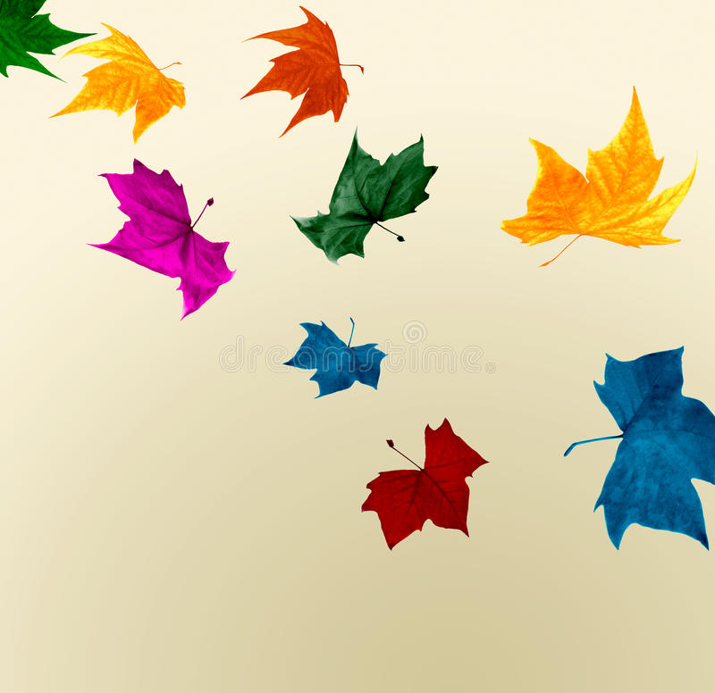 Falling autumn leaves in shocking colors royalty free stock images