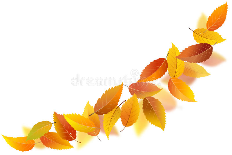 Falling autumn leaves. On white background, vector illustration vector illustration