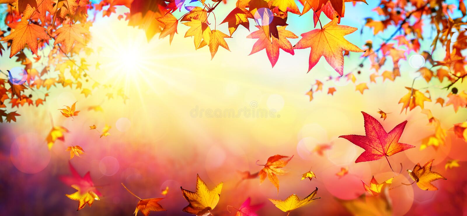 Falling Autumn Red Leaves With Sunlight royalty free stock photo