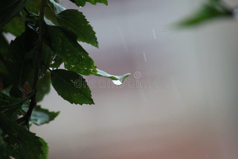 Falling Drops.! stock image