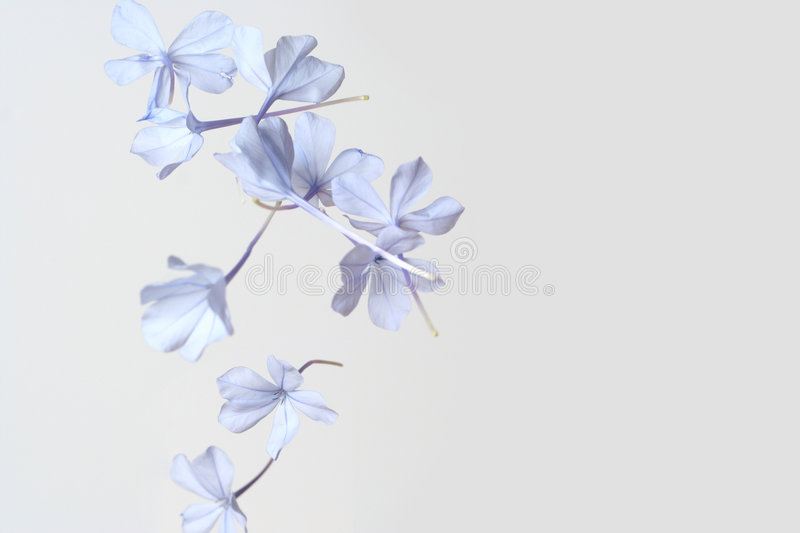 Falling flowers royalty free stock photos