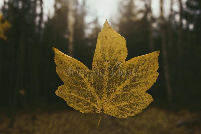 Falling leaf royalty free stock photography