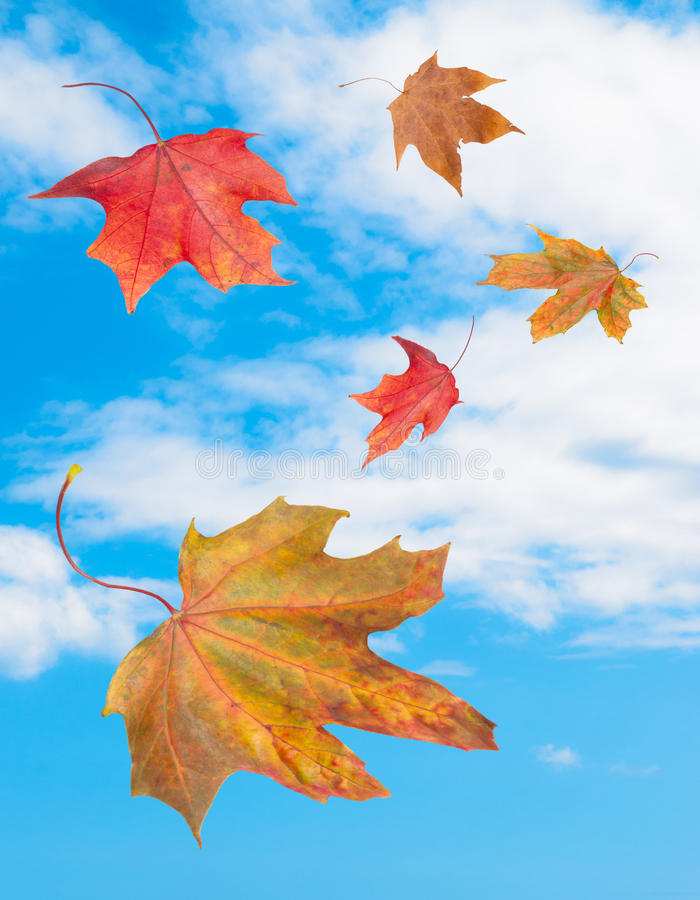 Download Falling Leaves stock image. Image of bright, clouds, falling - 26225127