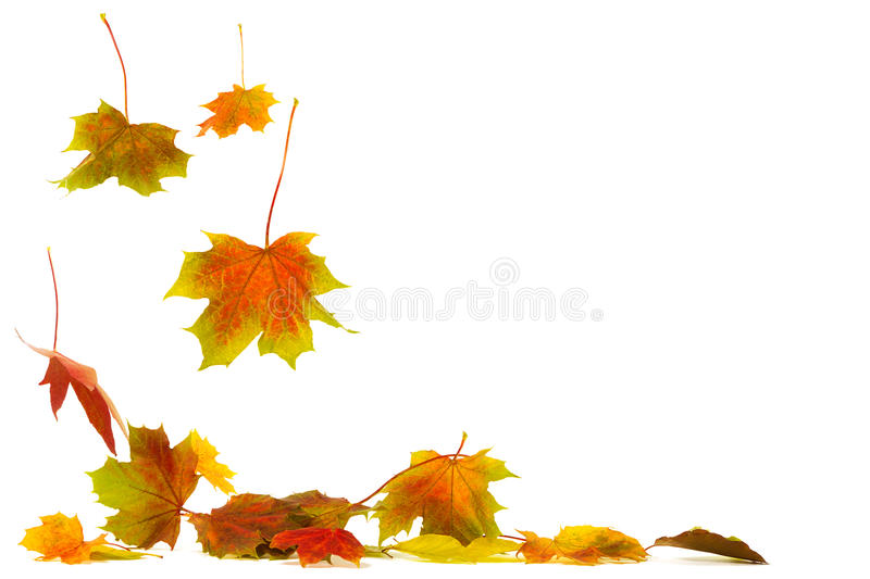 Falling leaves. Brightly colored falling leaves isolated on white background with shadows on the ground royalty free stock photo