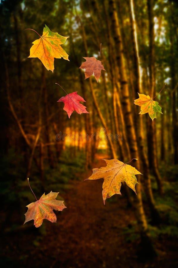 Download Falling Leaves Stock Image - Image: 27224051