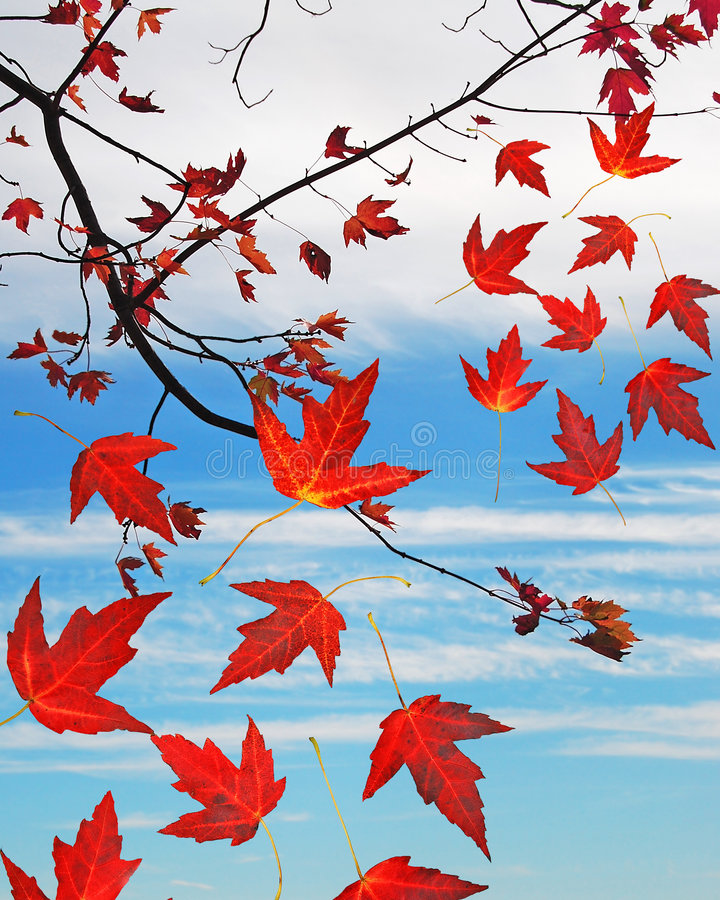 Download Falling leaves stock photo. Image of autumn, november - 6786082