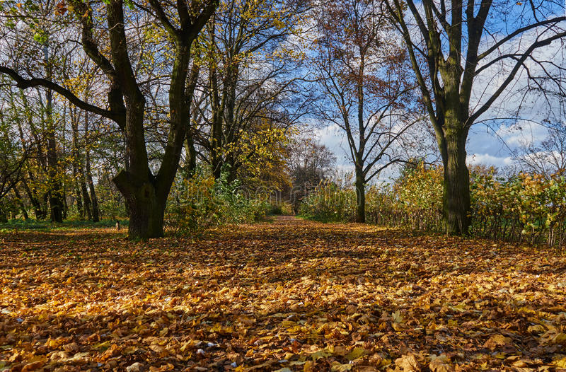 Falling leaves and alley in autumn park royalty free stock photography