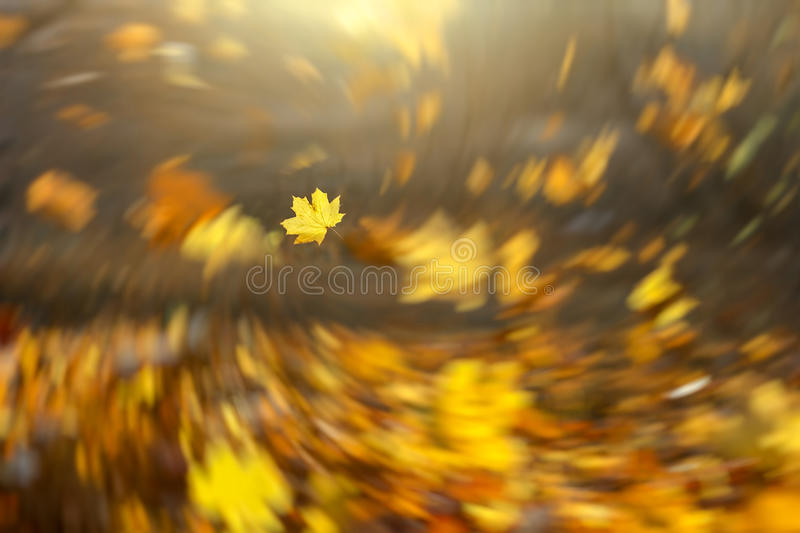 Falling leaves background stock photography