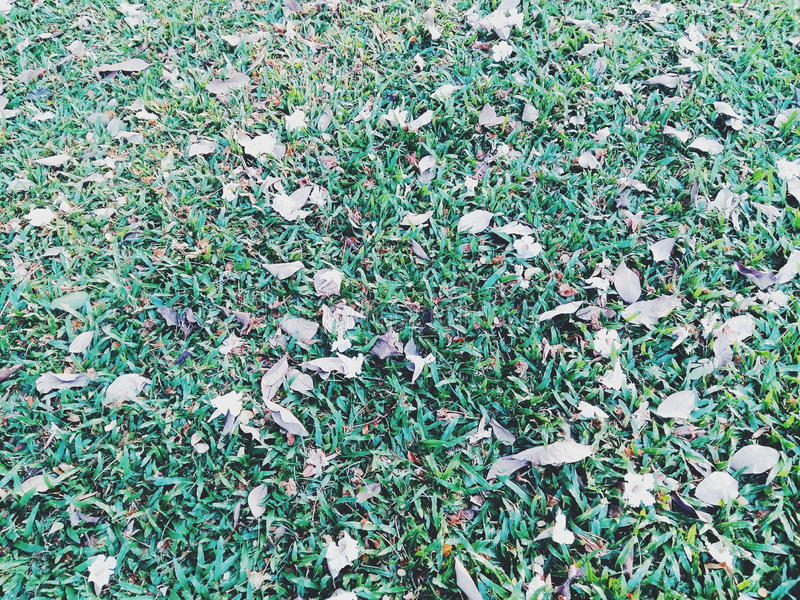 Falling leaves in the garden. royalty free stock photo