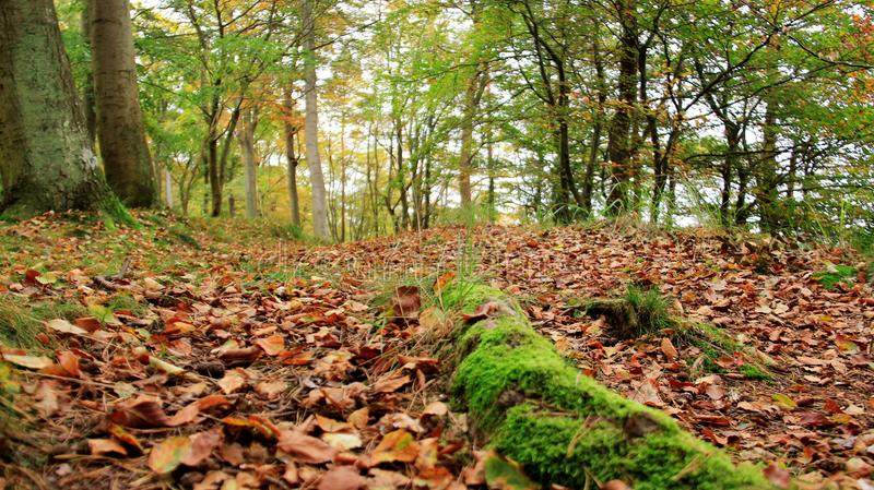 Falling Leaves With Green Moss royalty free stock photo