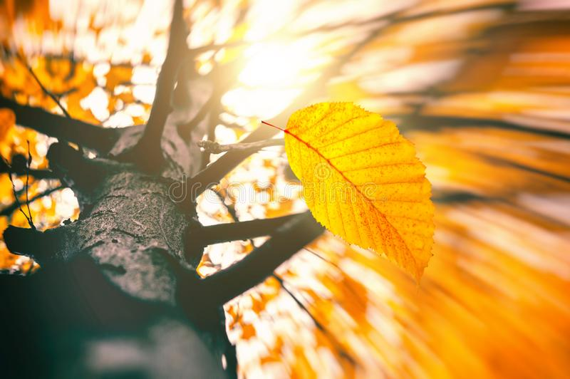Wind blowing dry leaves. Falling Leaves in the park. Fall with sun light. stock photos