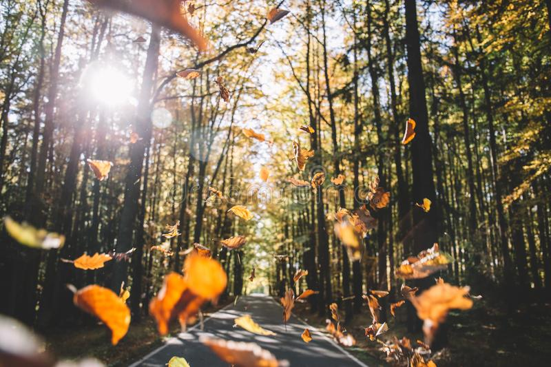 Falling leaves on the road royalty free stock photo