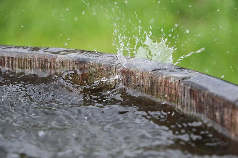 Falling rain in a barrel. Rain is falling in a wooden barrel full of water in the garden royalty free stock photo
