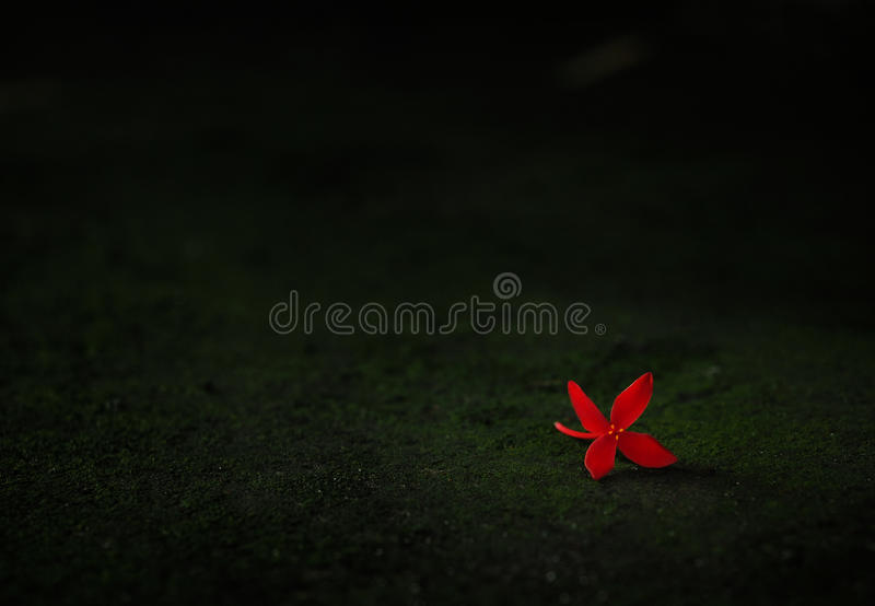 Falling red flower in the dark stock photo