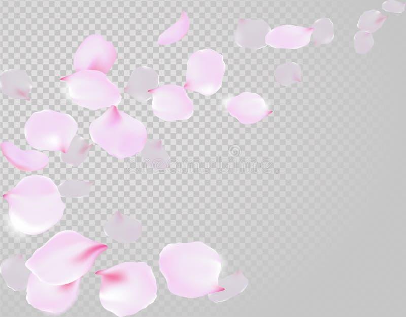 Falling rose petals soft delicate pink blossom on transparent background. Sakura cherry flying flowers. 3d realistic design. Vecto vector illustration