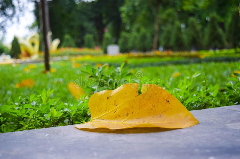 Falling season in Ha Noi, Vietnam.  royalty free stock photo