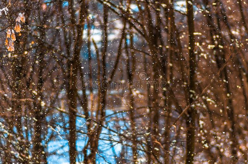 Falling snow closeup, natural winter background stock photo