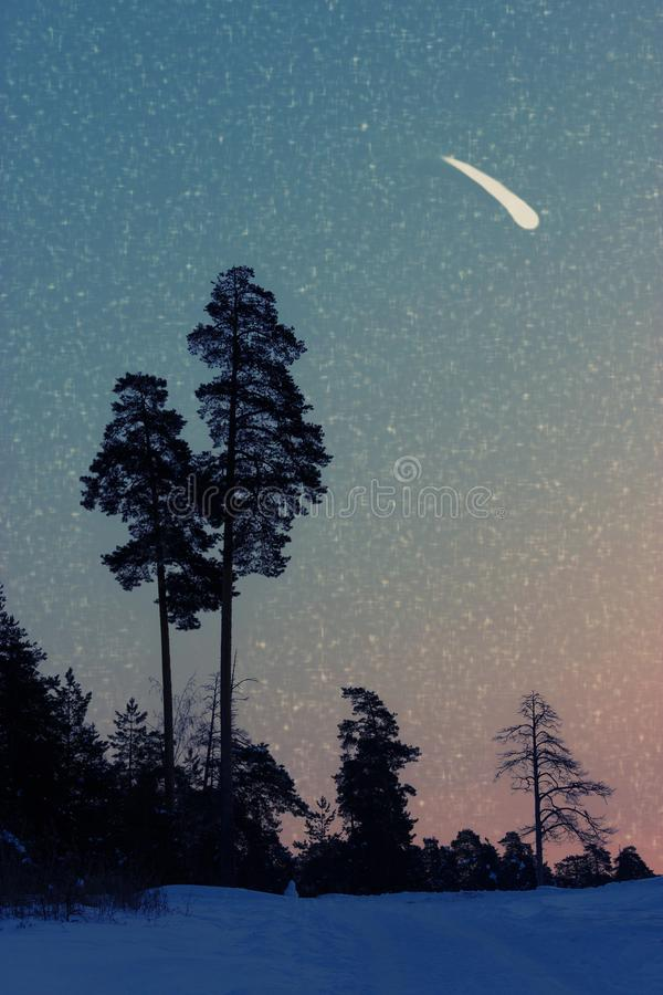 Falling stars in the forest. Make a wish concept royalty free stock images