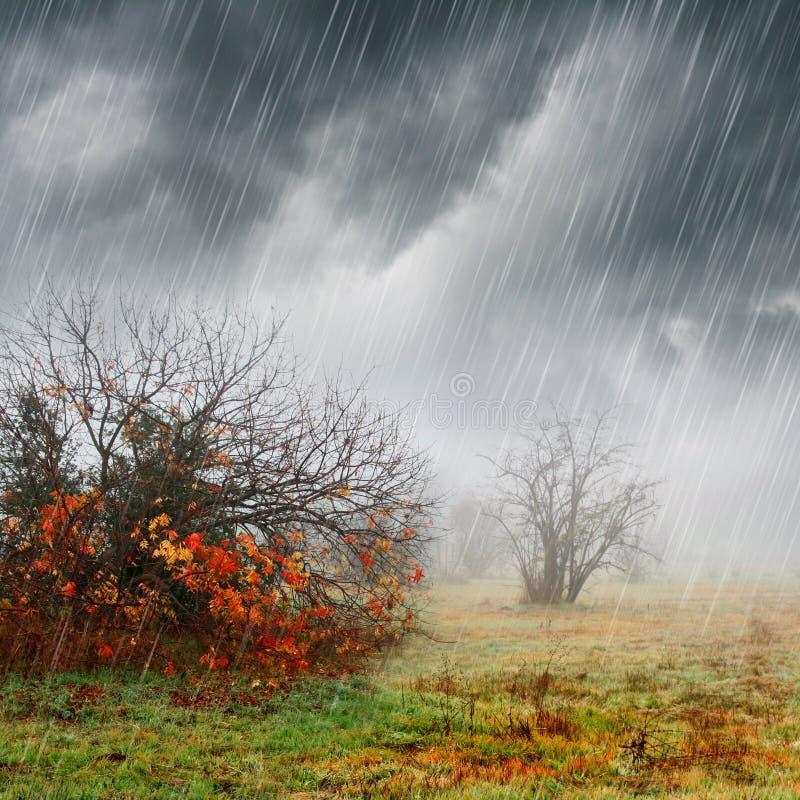 Falllandschaft im Regen und im Nebel stockfoto