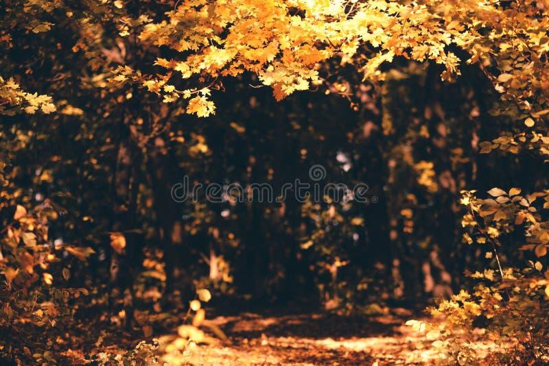 Falllandschaftswaldherbst-Naturhintergrund stockbilder