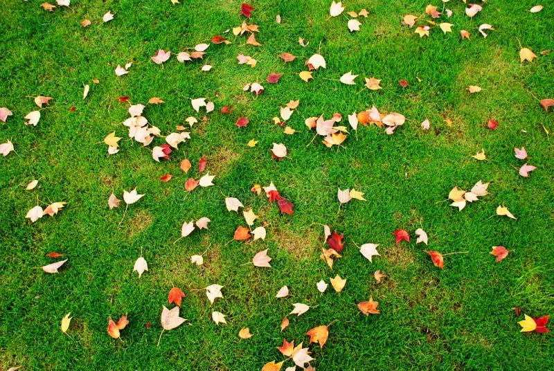 fallna gräsgreenleaves arkivbild