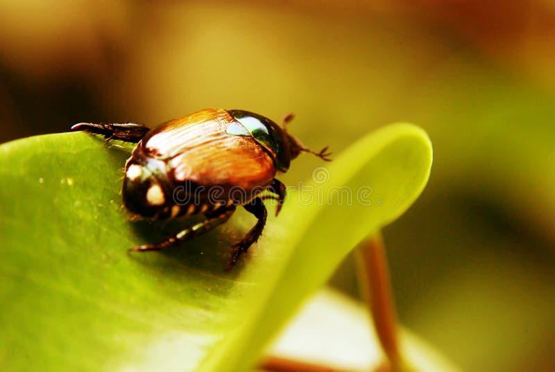 Fallos de funcionamiento del escarabajo imagenes de archivo