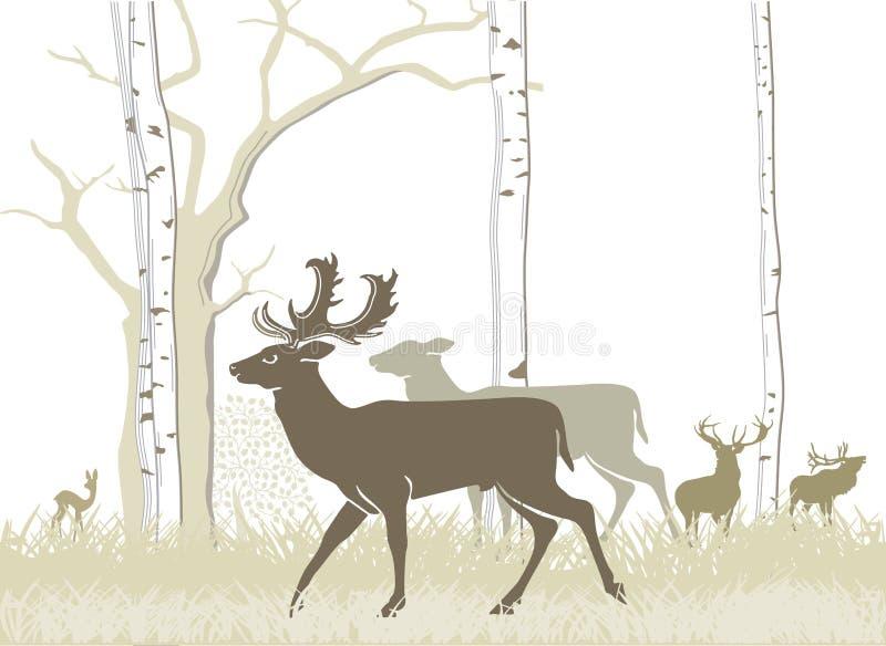 Download Fallow deer stock vector. Image of woodland, season, fallow - 24304347
