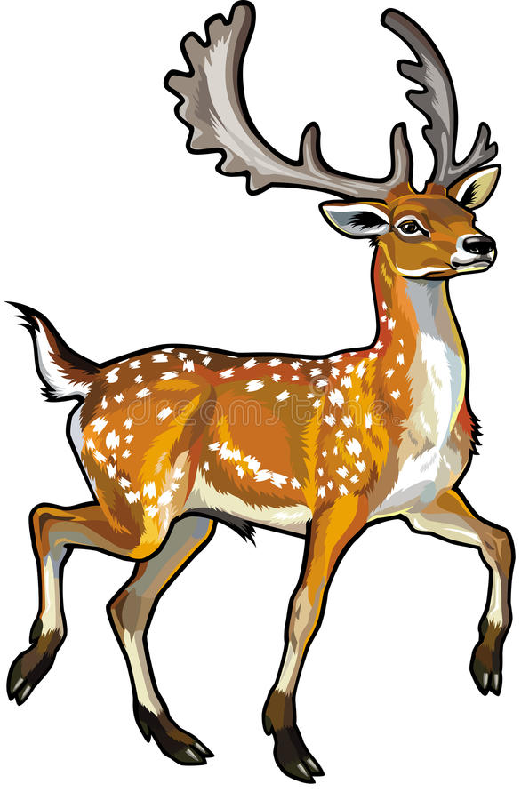 Download Fallow deer stock vector. Image of native, mammal, male - 30781054