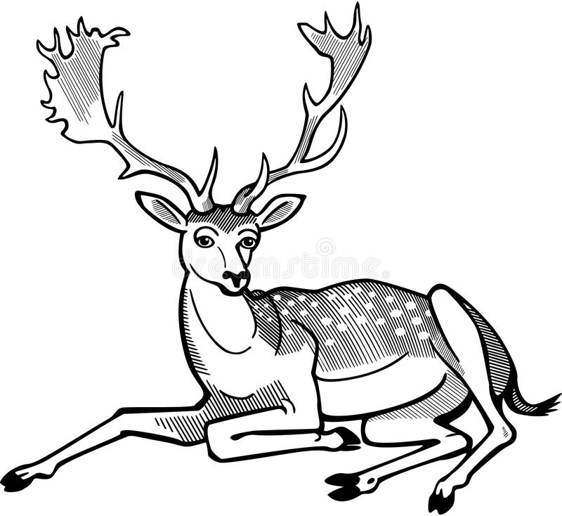 Deer Contour Line Drawing : Fallow deer stag stock vector illustration of dama