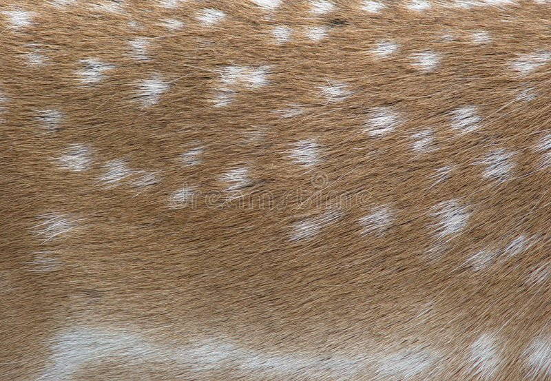 Fallow deers fur stock photos