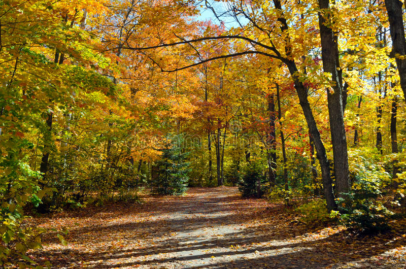 Falls colorful trees. In park. Ontario, Canada stock photo