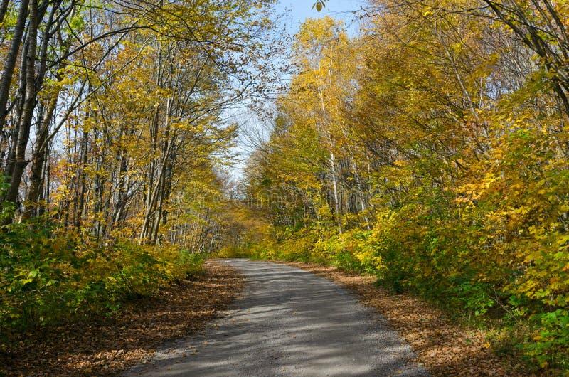 Falls colorful trees. In park. Ontario, Canada stock photos