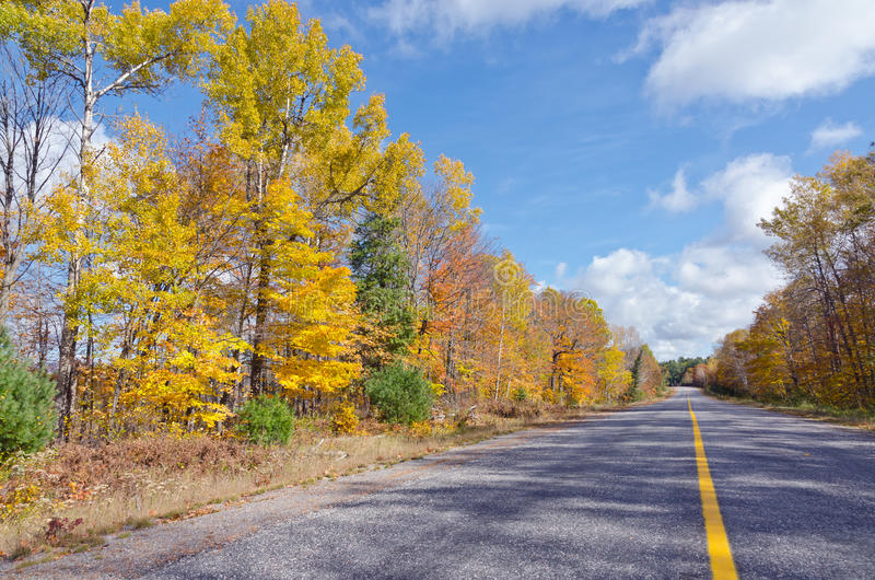 Falls colorful trees. In park. Ontario, Canada royalty free stock photography