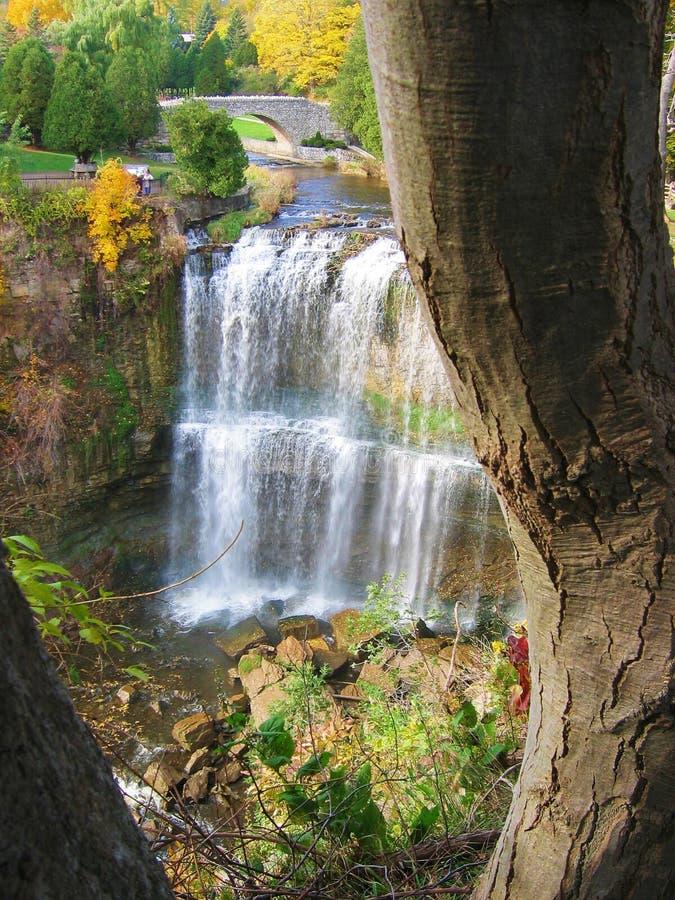 Falls with tree stock photo