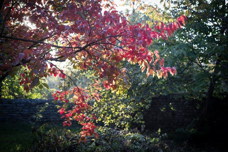 Fallszene Schöner herbstlicher Park Blatt-Waldweg im Herbst stockfotos