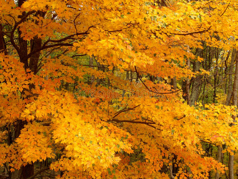 falltree för 3 detalj royaltyfri foto