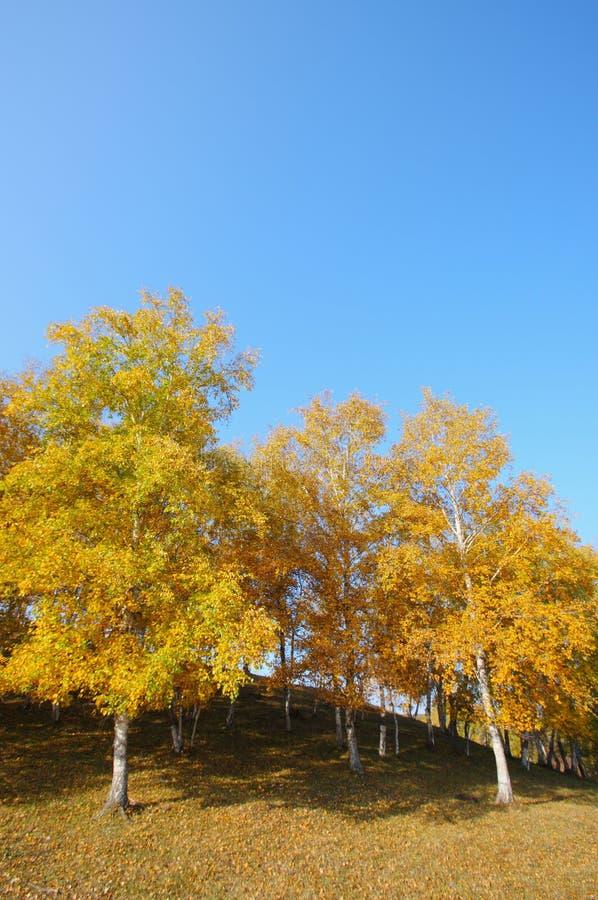 falltrees royaltyfria foton