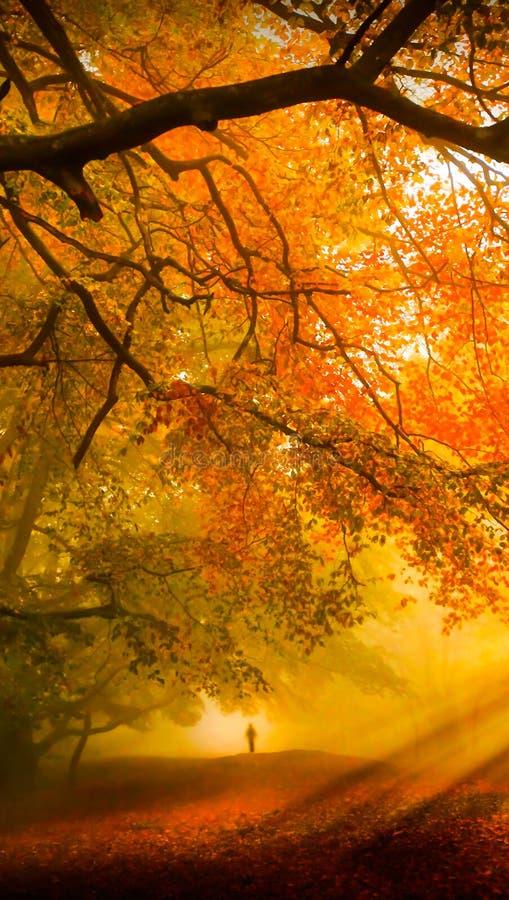 Fallwaldzelltapetenhintergrund stockbild